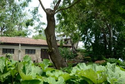 Част от дворцовата градина