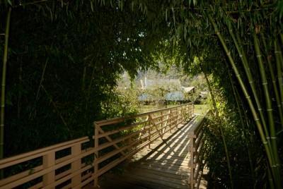 Къщата на Баба Ванга погледната от моста с бамбуковия тунел