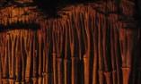 Скален орган