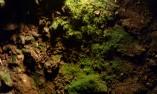 Растителен свят в Магурата