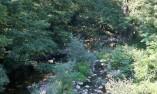 Водите на Дряновска река