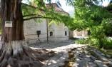 Дърво в манастира