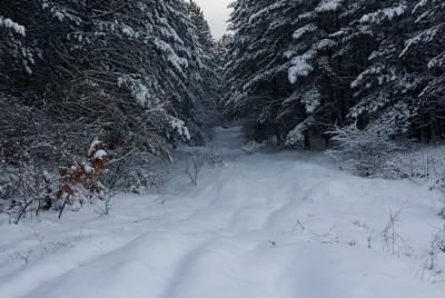 Нагоре в снега