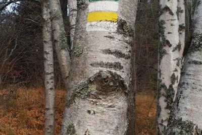 Дърво с туристическа маркировка
