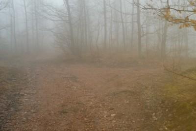 Горската мъгла