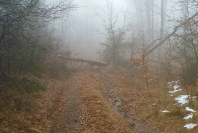 Марпрутът е препречен от дърво