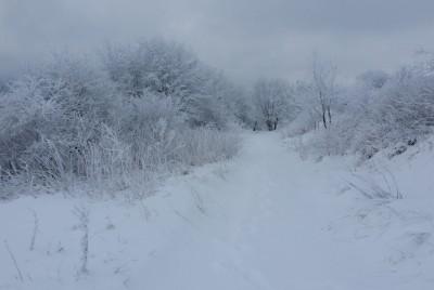 Сняг до коленете