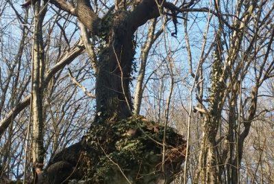 Интересно дърво