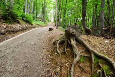 Отрязано дърво
