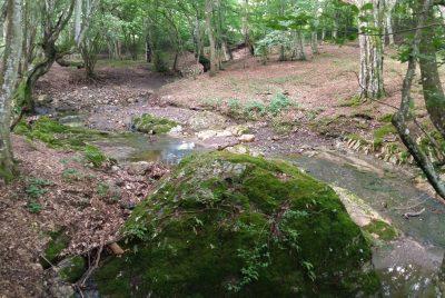 Река Петелейска