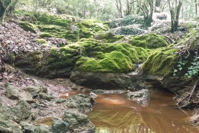 Красива част от Петелейска река