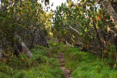 Пътеката на боровинките